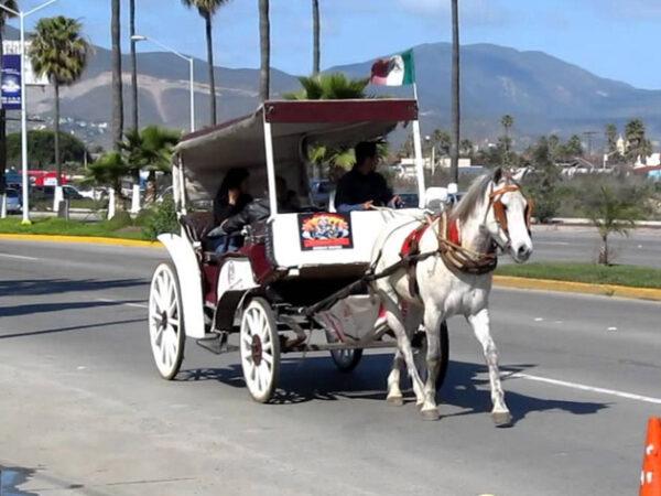 Ensenada Taxi