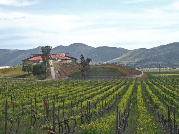 santo tomas winery mexico - Ensenada Mexico Tourist Attractions